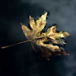 """Floating Leaf"" by Gerry Breckon Tied 1st"